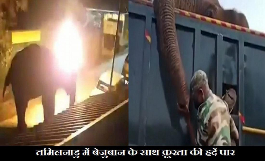 elephant death, tamil nadu elephant incident