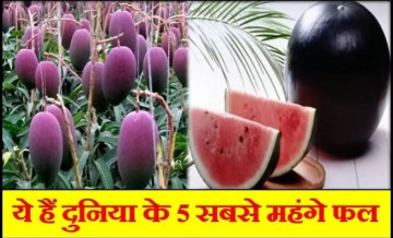 most expensive fruits, expensive fruits of world
