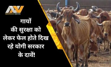बीजेपी के लिए सिर्फ चुनावी मुद्दा हो गई है गाय? ग्रेटर नोएडा में भूख से एक दर्जन से ज्यादा मौतें!