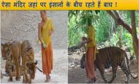 thailand buddhist tiger temple, tiger temple,