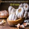 Chinese Garlic, Indian Garlic