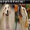 Dog weeping, Viral