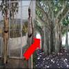 24 hour tree protection, vip tree