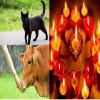 diwali news, diwali interesting facts
